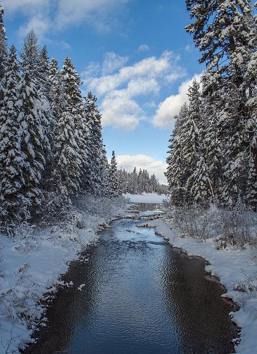 Winter Creek Print by Fran Riley