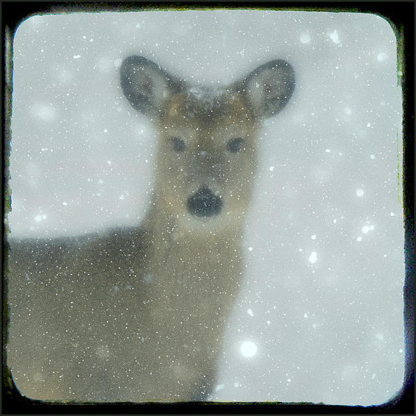 Gothicolors Images - Winter Deer