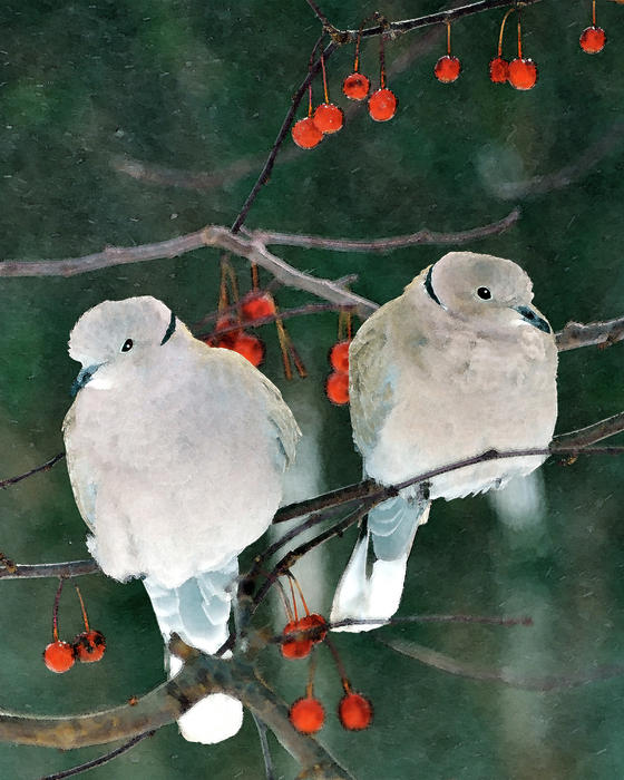 Winter Doves Print by Betty LaRue