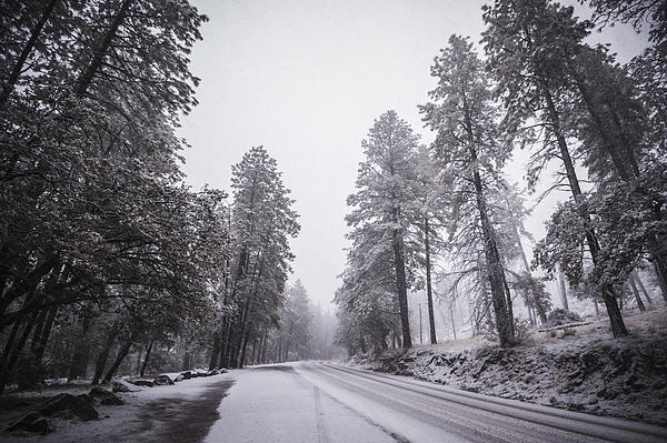 Winter Driven Print by Anthony Citro