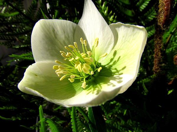 Winter Flowers Print by Joyce Woodhouse