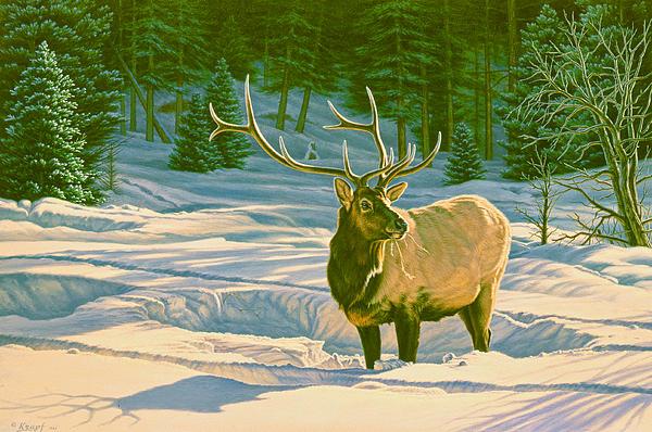 Winter Forage - Elk Print by Paul Krapf