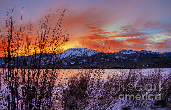 Winter Glow Print by Dianne Phelps