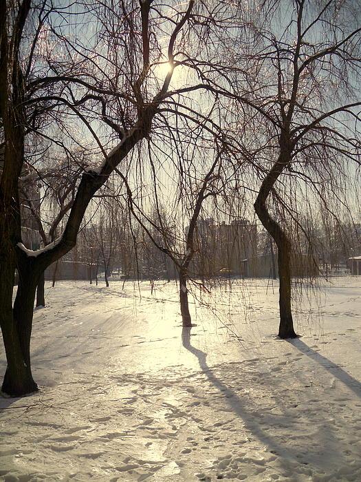 Henryk Gorecki - Willows in Winter