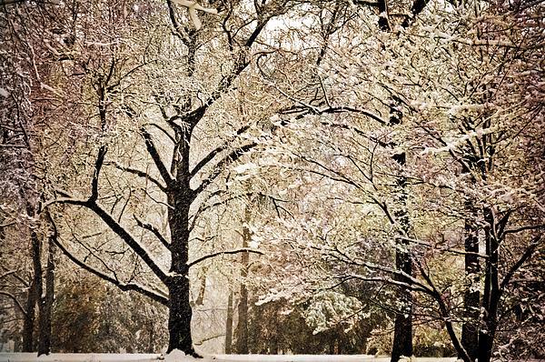 Winter In St. Louis Print by Marty Koch