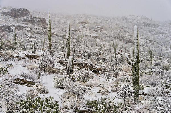 Winter In The Desert Print by Sandra Bronstein