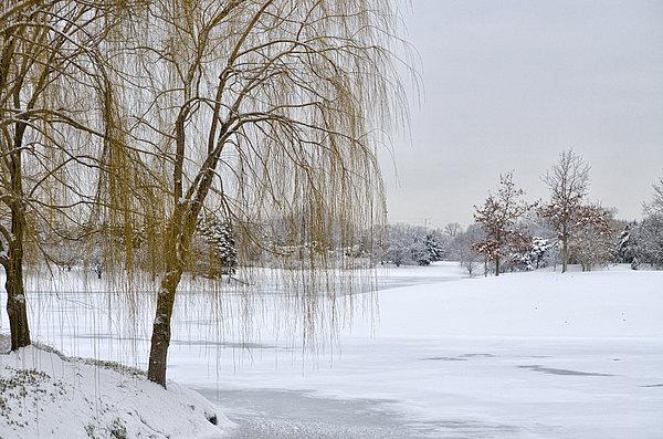 Winter Landscape Print by Julie Palencia