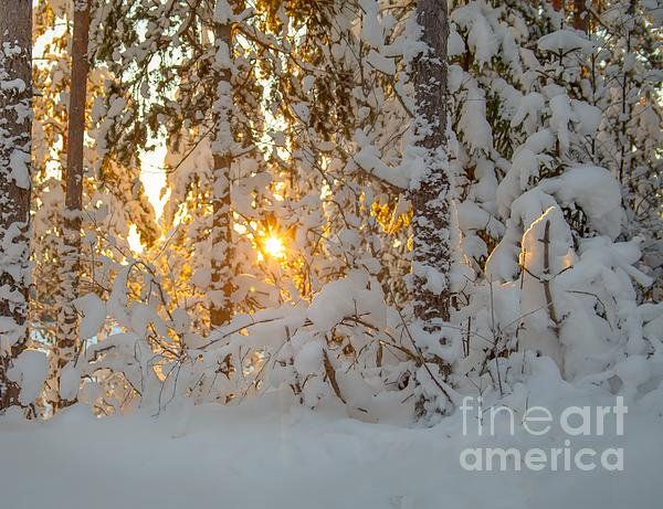 Winter Light Print by Rose-Maries Pictures
