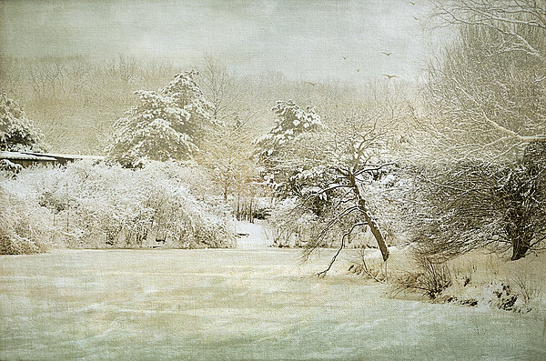 Winter Silence Print by Julie Palencia