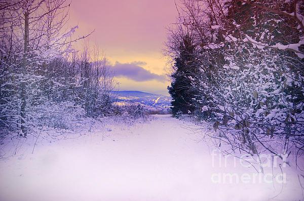 Winter Skies Print by Tara Turner