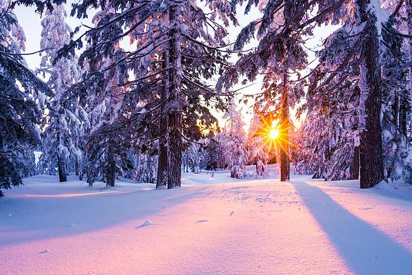 Winter Sunset Through Trees Print by Priya Ghose