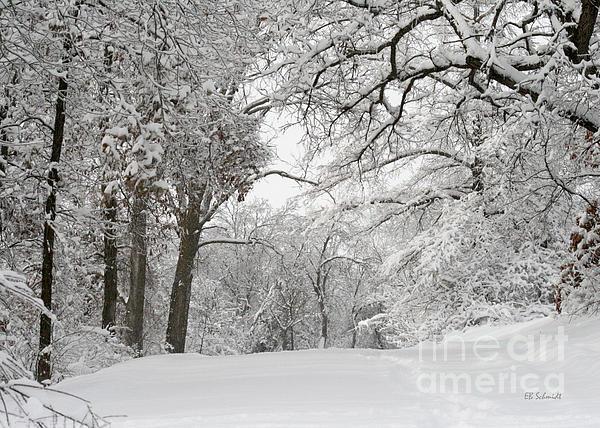 Winter Trail Print by E B Schmidt