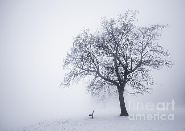 Winter Tree And Bench In Fog Print by Elena Elisseeva