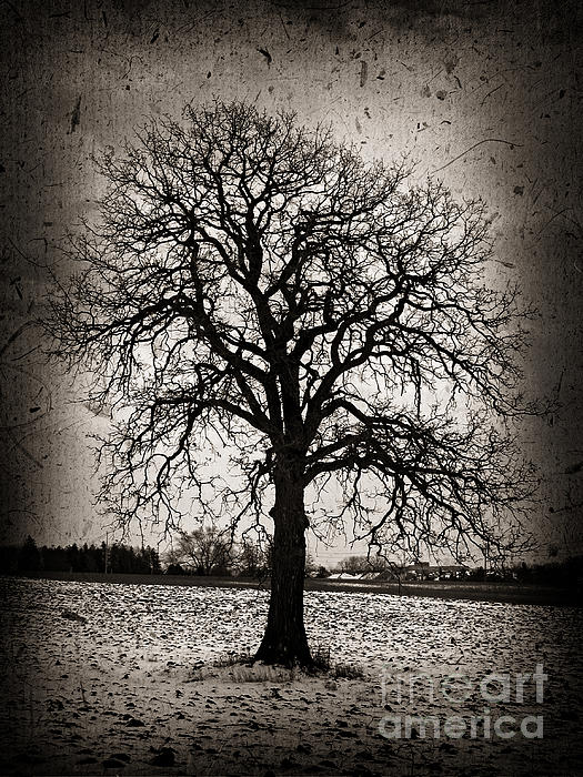 Winter Tree Print by Elena Elisseeva