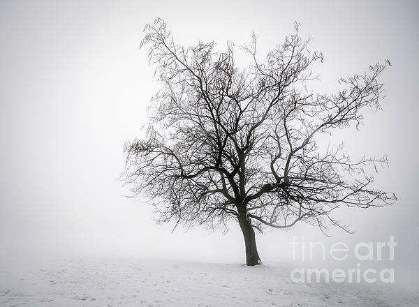 Winter Tree In Fog Print by Elena Elisseeva