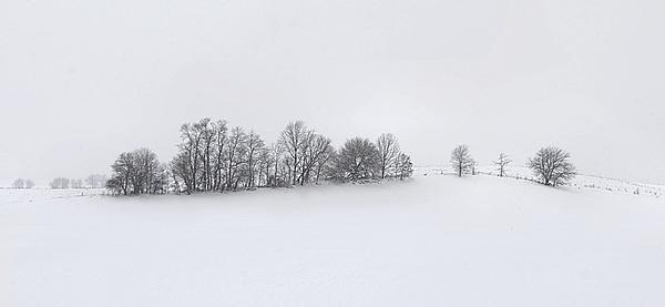 Winter Tree Line In Indiana Print by Julie Dant