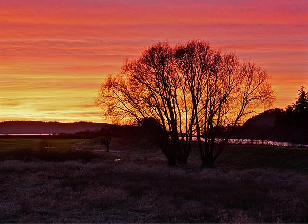 Winter Tree With Red Sky Print by Valerie Garner