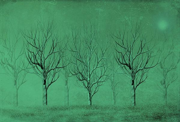 Winter Trees In The Mist Print by David Dehner