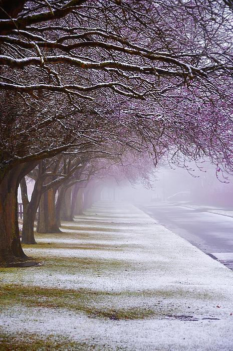 Winter Trees Print by Svetlana Sewell
