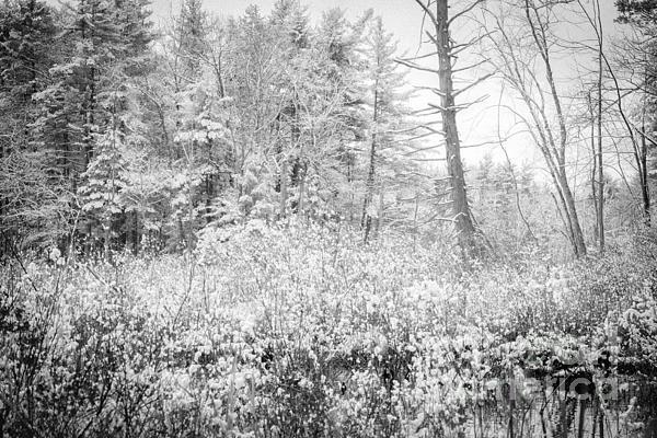 Winter Whites Print by Sue OConnor