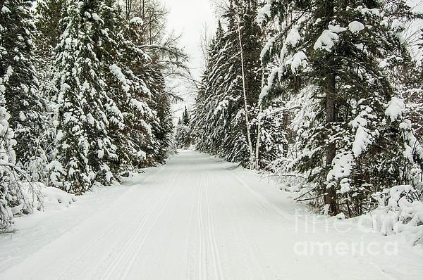 Winter Wonder Land Print by Patrick Shupert