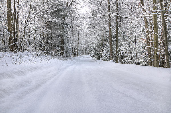 Winter Wonderland Print by Donna Doherty