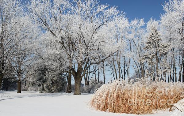 Winter Wonderland Print by Robyn Saunders