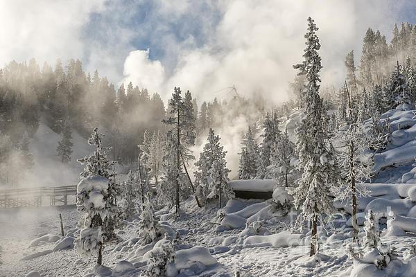 Winter Wonderland - Yellowstone National Park Print by Sandra Bronstein