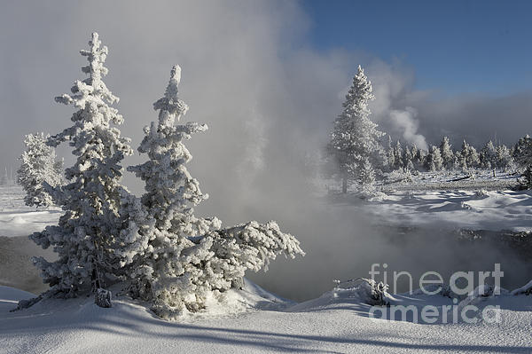 Winter's Glory - Yellowstone National Park Print by Sandra Bronstein