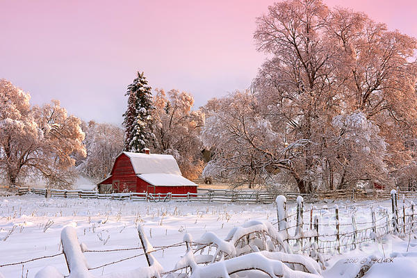 Winters Glow Print by Reflective Moment Photography And Digital Art Images