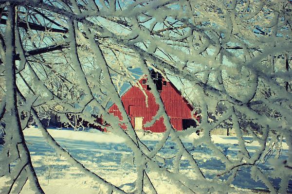 Wintery Red Barn Print by Julie Hamilton