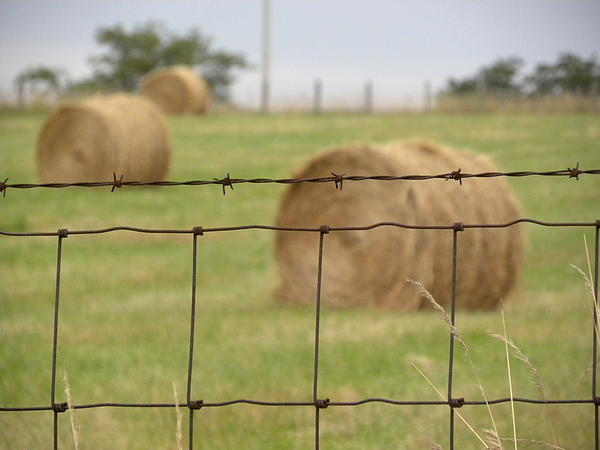 Wire And Hay Print by Jewels Blake Hamrick