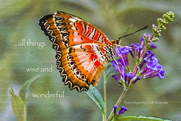 Wise And Wonderful Print by Karen Stephenson