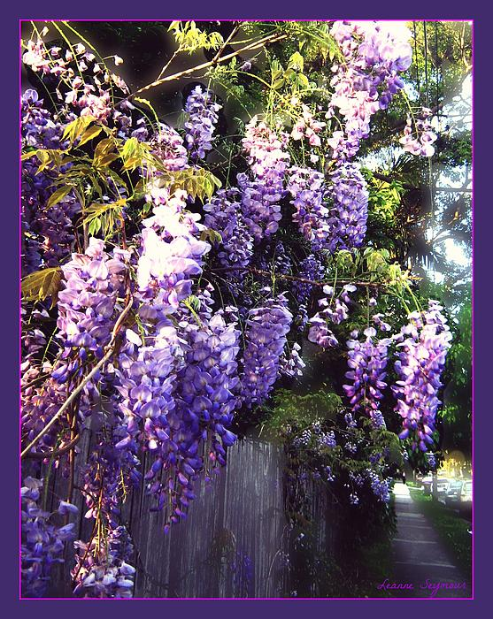 Leanne Seymour - Wisteria dreaming