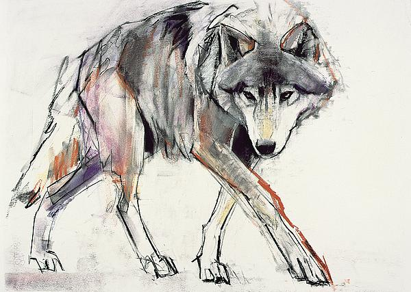 Wolf  Print by Mark Adlington