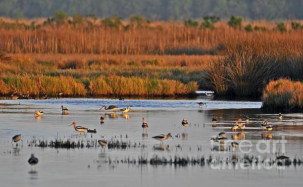 Wonderful Wetlands Print by Al Powell Photography USA
