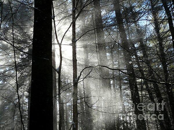 Wondrous Light Print by Avis  Noelle