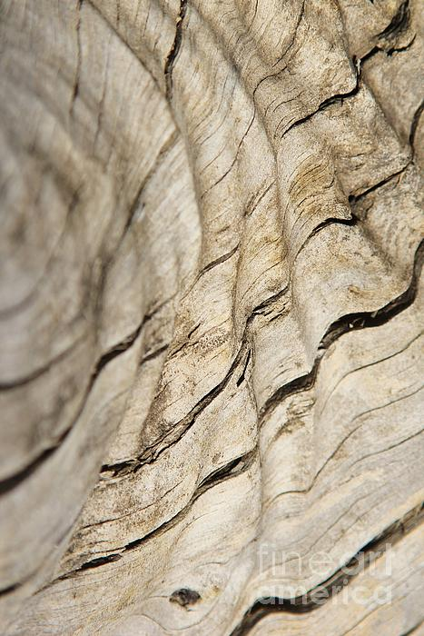 Wood Grain Grunge And Texture Print by Hermanus A Alberts