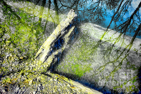 Wood Reflections Print by Olivier Le Queinec