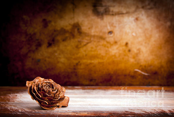 Wooden Rose Background Print by Tim Hester
