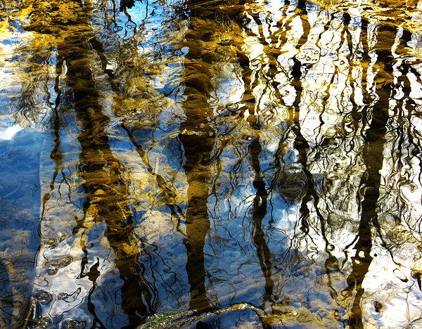 Woodland Reflections Print by Shawna  Rowe