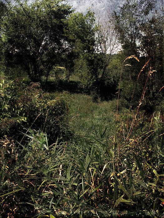 Woods Near My Home Print by Scott Kingery