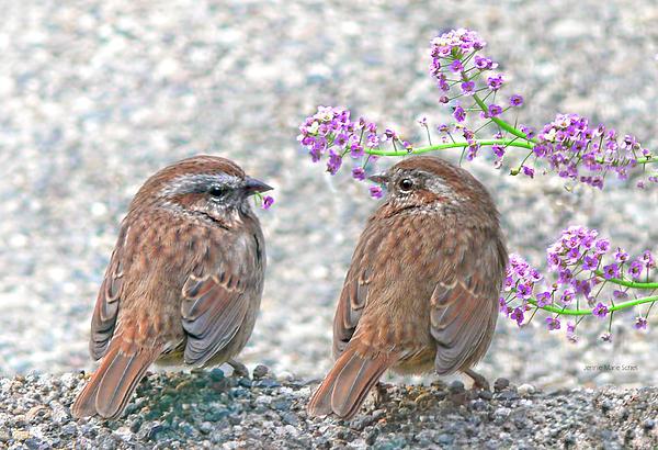 Wren Bird Sweethearts Print by Jennie Marie Schell