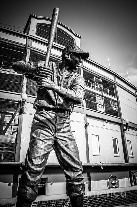 Wrigley Field Ernie Banks Statue In Black And White Print by Paul Velgos