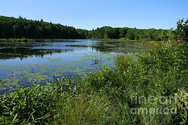 Neal  Eslinger - Yale Myers Forest Pond