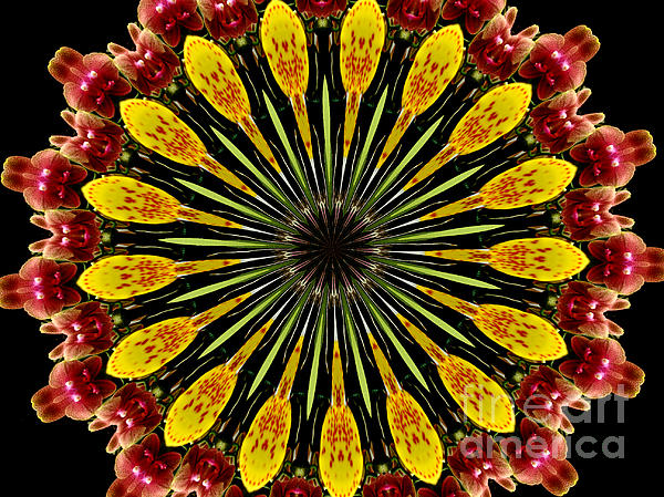 Yellow And Apricot Orchids Kaleidoscope Print by Rose Santuci-Sofranko