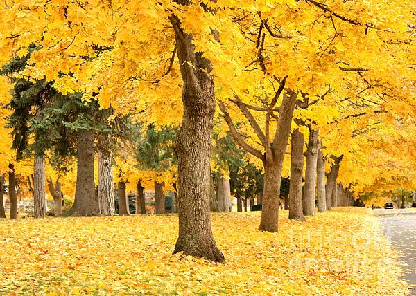 Yellow Autumn Wonderland Print by Carol Groenen