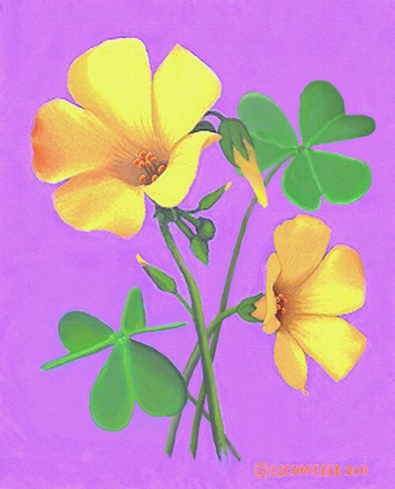 SophiaArt Gallery - Yellow Clover Flowers