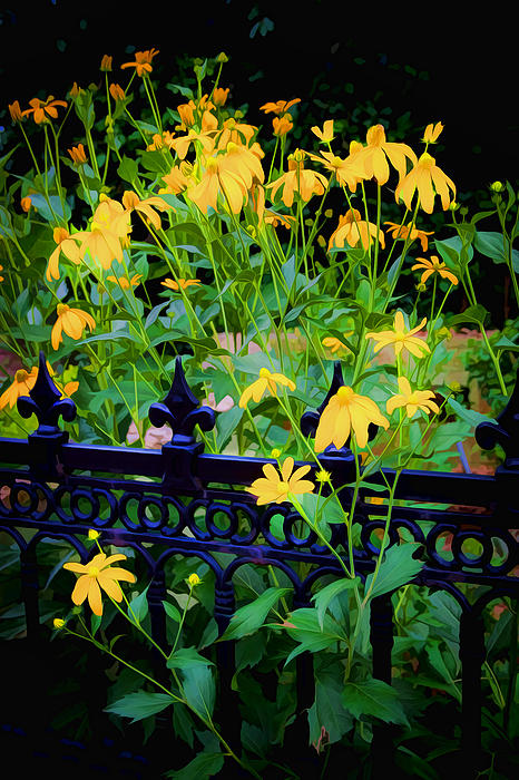 Yellow Coneflowers Echinacea Wrought Iron Gate Print by Rich Franco
