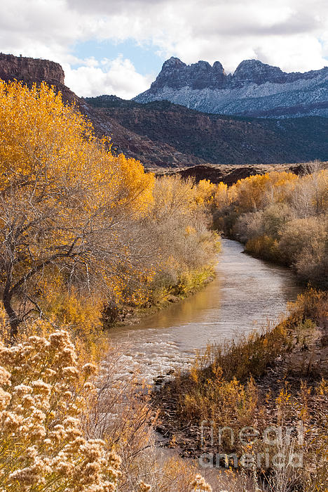 Yellow Cottonwoods And Autumn Colors With Early Snows Along The Virgin River Near Zion National Utah Print by Robert Ford